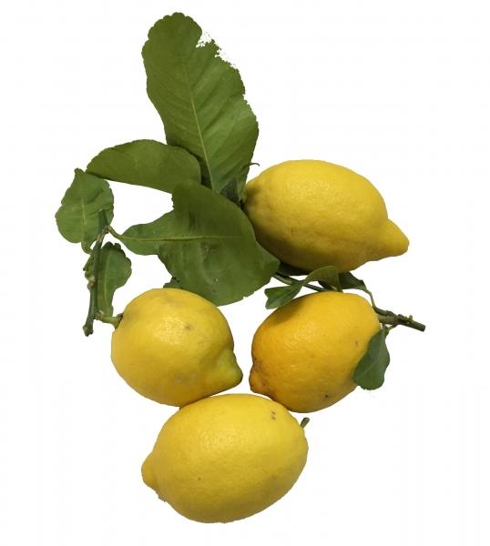 Limone Costa d'Amalfi 1Kg - Amalfi-Zitronen mit Blättern - unbehandelt